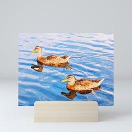 2 Ducks in a Pond Mini Art Print