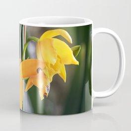 Longwood Gardens Orchid Extravaganza 71 Coffee Mug