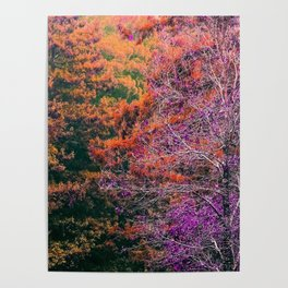 autumn tree in the forest with purple and brown leaf Poster