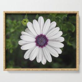 Flower Portriat - Purple Power Serving Tray
