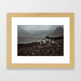 Sheep on the beach Framed Art Print