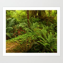 In The Cold Rainforest Art Print