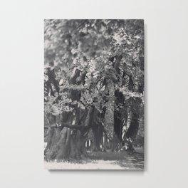 Black and White Tree Avenue Metal Print