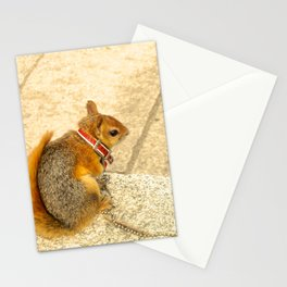 Squirrelly  Sightings Stationery Cards