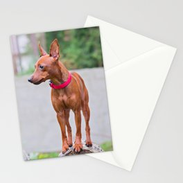 Outdoor portrait of a red miniature pinscher dog with wall behind Stationery Cards