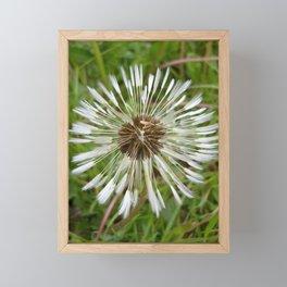 Dandelion In The Rain Framed Mini Art Print