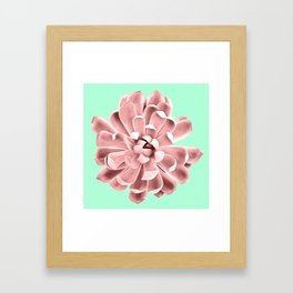 Pink Succulent Plant on Cyan Framed Art Print