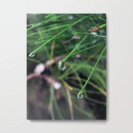 dew Metal Print