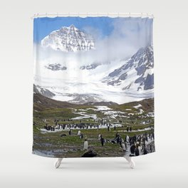 King Penguins at St. Andrew's Bay Shower Curtain