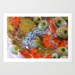 Blue dragon nudibranch with impressive plumage Art Print