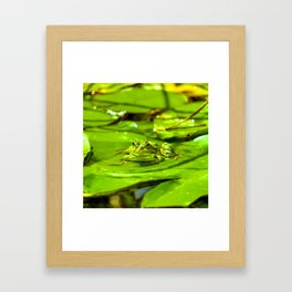 Frog On A Lily Framed Art Print