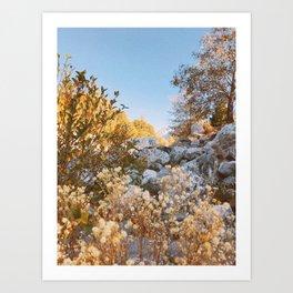 Forest Falls V Art Print