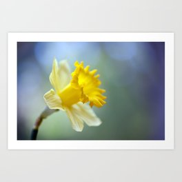 Daffodil 9909  Art Print