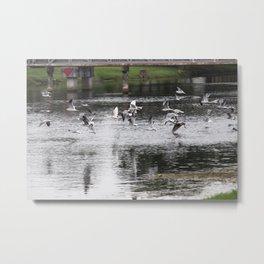 Birds on the run Metal Print
