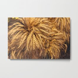 bunch of wheat Metal Print