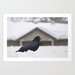 Ravens on the Coquihalla Highway 4 Art Print
