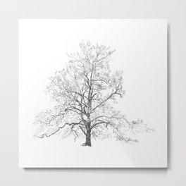 Sycamore Metal Print