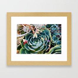 Estate Sale Succulents Framed Art Print