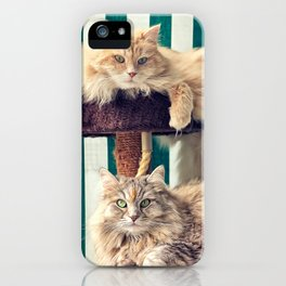 Siberian cats on the cat tree iPhone Case