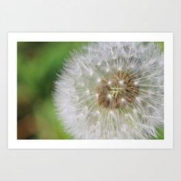 Close-up of Dandelion background Art Print