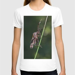 Macro of a really cool insect T-shirt