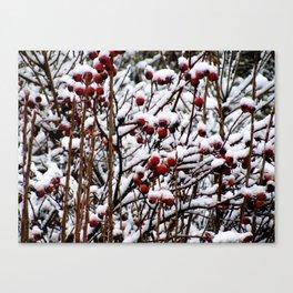 Winterberrys Canvas Print