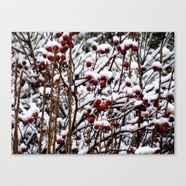 Winterberrys Canvas Print