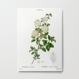 Germander meadowsweet, Spiraea ulmifolia from Traité des Arbres et Arbustes que l'on cultive en Fran Metal Print