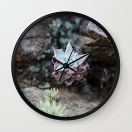California Desert Life - Succulents at Santa Cruz Island Wall Clock