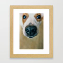Dog face Framed Art Print
