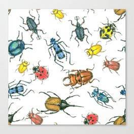 Beetles, watercolor and ink Canvas Print