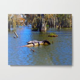 Sunning Alligator Metal Print