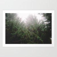 Hixon Forest Art Print