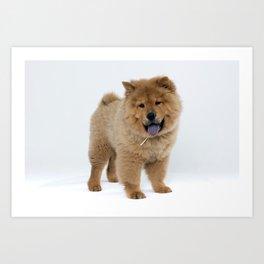 Chow Chow Puppy Art Print