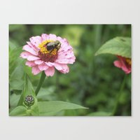 rileigh smirl Canvas Prints featuring Flower and Bee by Rileigh Smirl