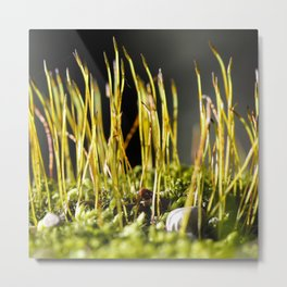 Forest Candles  Metal Print