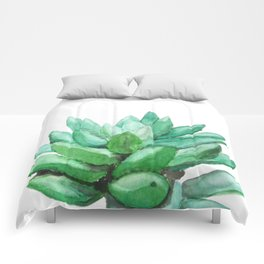 succulent echeveria Comforters