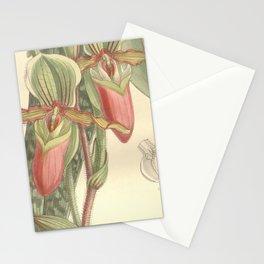 Paphiopedilum victoria mariae Stationery Cards