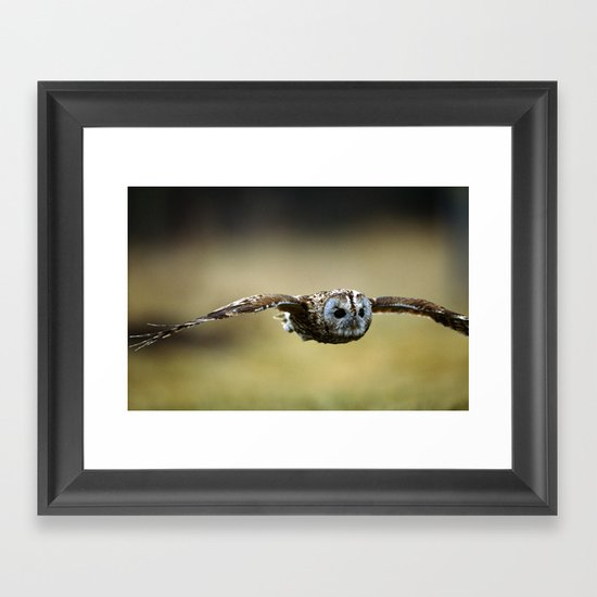 FLIGHT OF THE TAWNY OWL Framed Art Print