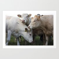 cows Art Prints featuring Cows. by wil-ko