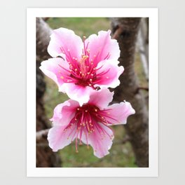 Flowers in Pink Art Print