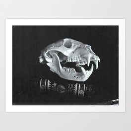 Bear Skull Still Life Art Print