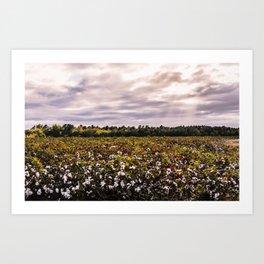 Cotton Field 23 Art Print