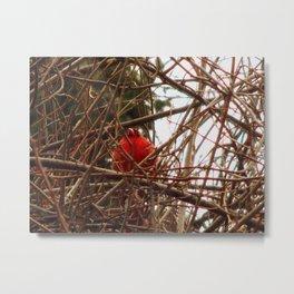 Chilly Cardinal Metal Print