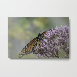 The Monarch!.....Butterfly Metal Print