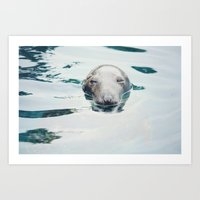 seal Art Prints featuring Seal by betweenthebookpages