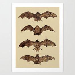 Bats zoology illustration Art Print