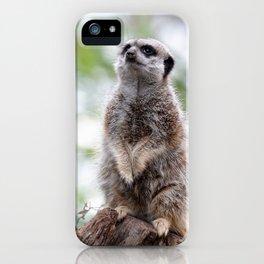 Meerkat on guard duty iPhone Case