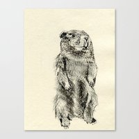 beaver Canvas Prints featuring Beaver by Amy Veried