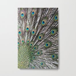Green Peafowl Feathers Metal Print